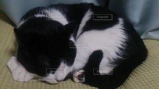ベッドの上で横になっている黒い猫の写真・画像素材[802088]