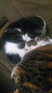 横になって、カメラを見ている猫の写真・画像素材[802110]