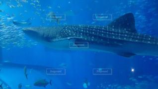 水面下を泳ぐ魚たちの写真・画像素材[802137]