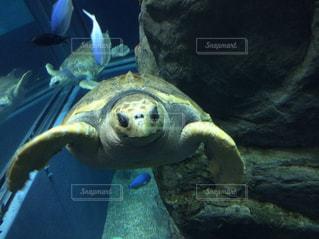 水の下で泳ぐ海亀の写真・画像素材[802166]