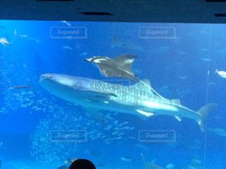 水面下を泳ぐ魚たち - No.802189