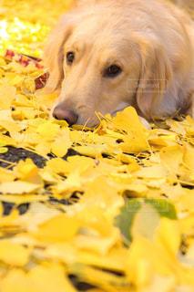 地面に横たわっている犬の写真・画像素材[802451]