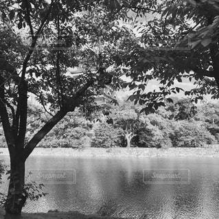 水の体の横にあるツリーの写真・画像素材[802727]