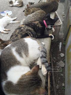 横になって、カメラを見ている猫の写真・画像素材[802911]