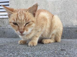 歩道の上に座ってオレンジと白猫の写真・画像素材[802924]