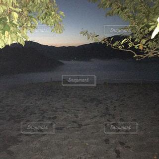 ビーチの木の写真・画像素材[802931]