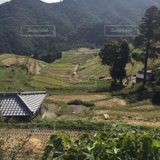 緑豊かな丘の中腹に緑のビューの写真・画像素材[802955]