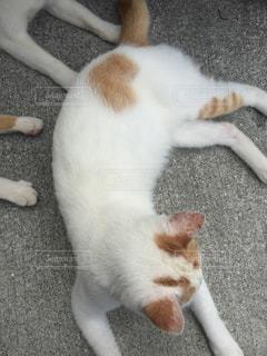 地面に横になっている猫の写真・画像素材[803481]