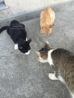鏡の前に立っている猫の写真・画像素材[803492]