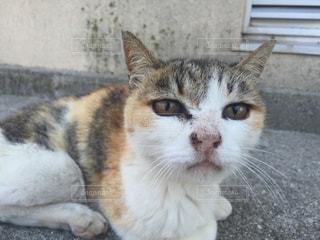 建物の前に座っている猫の写真・画像素材[803495]