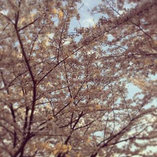 近くの木のアップの写真・画像素材[802683]