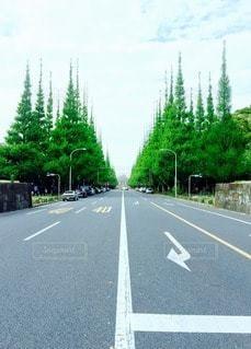 森林 - No.29828