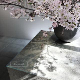 影の写真・画像素材[805001]
