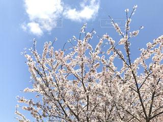 春空の写真・画像素材[805712]