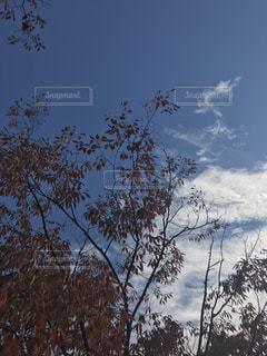 秋めいた空の写真・画像素材[851431]