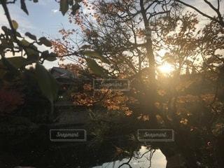 冬の黄昏夕日の写真・画像素材[890301]