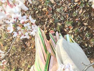 さくら咲く代々木公園 - No.971874