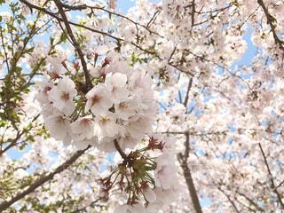 木の枝に花の花瓶の写真・画像素材[971876]