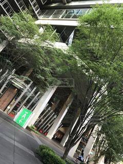東京国際フォーラムの写真・画像素材[803914]