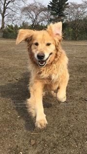 犬の写真・画像素材[24262]