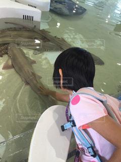 サメに触ってみたよの写真・画像素材[807459]