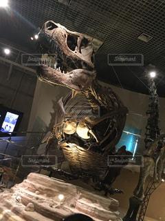 博物館の恐竜の化石の写真・画像素材[1503569]