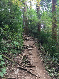 森の中の土の道 - No.804476