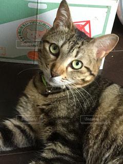 近くに猫のアップの写真・画像素材[804443]