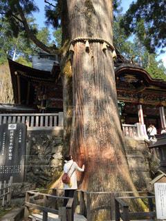 神社のパワースポットの写真・画像素材[804489]