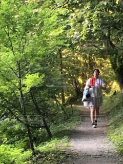 ハイキングコースのようの写真・画像素材[804516]