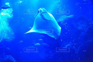 水面下を泳ぐ魚たちの写真・画像素材[805521]