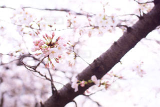 木の枝に花の花瓶の写真・画像素材[1081923]