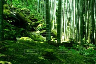 寺の風景日本の自然の写真・画像素材[3126940]