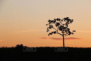 アマゾンの夕日の写真・画像素材[805278]