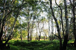 緑の森の中の写真・画像素材[2331946]