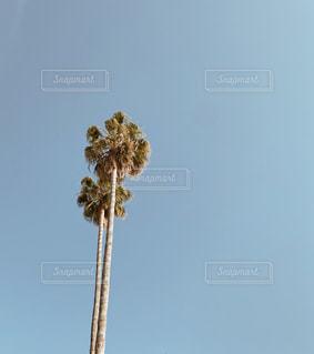 ヤシの木の写真・画像素材[3220593]