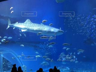 水族館の写真・画像素材[1002496]