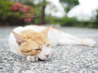猫の写真・画像素材[86565]