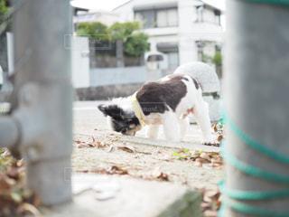 犬の写真・画像素材[132409]