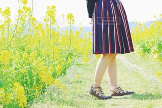 春の写真・画像素材[377419]
