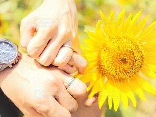 向日葵と指輪の写真・画像素材[3611747]
