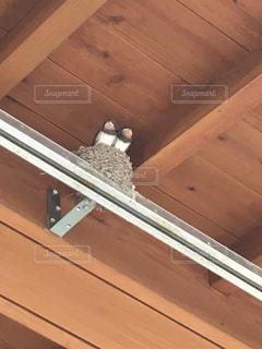 ツバメの巣の写真・画像素材[806008]