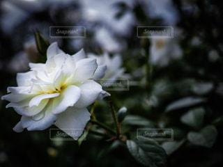 近くの花のアップの写真・画像素材[806214]