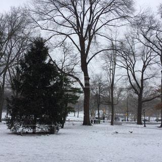 雪に覆われた木の写真・画像素材[806514]
