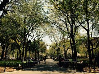 公園の木の写真・画像素材[806520]