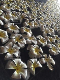 近くの花のアップの写真・画像素材[806572]
