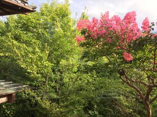 木の隣に木製のベンチの写真・画像素材[813420]