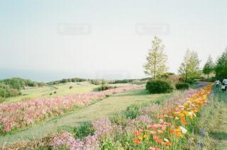 花畑の写真・画像素材[1000346]