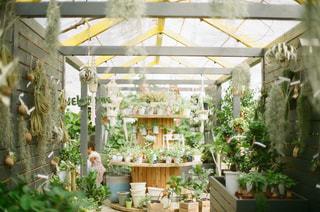 庭の植物の写真・画像素材[1235346]
