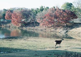 緑豊かな緑の草原に放牧牛の群れの写真・画像素材[1235349]